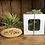 Thumbnail: Air Plant in gift box 'Let 💚 grow'