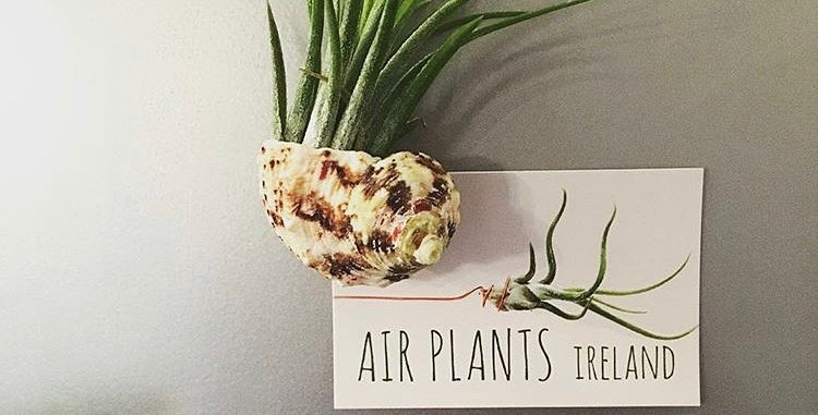 Air Plant and Shell Fridge Magnet