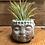 Thumbnail: Cement Buddha head with air plant
