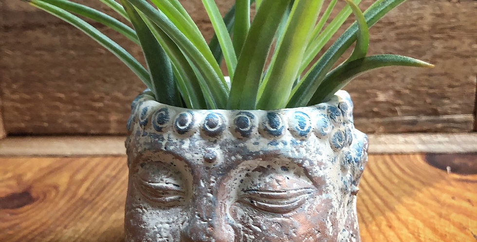 Cement Buddha head with air plant