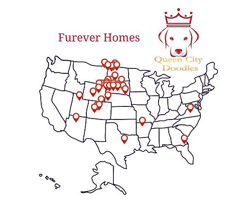 Furever Homes.png