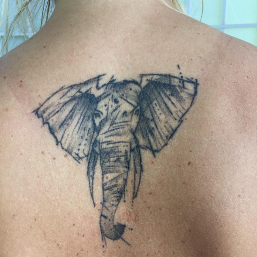 Elephant - Healed