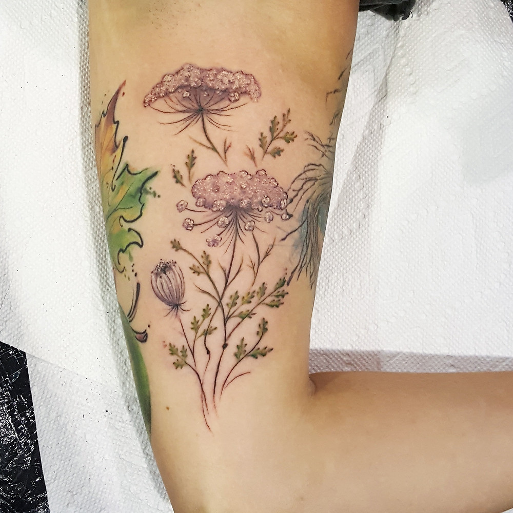 Queen Anne's Lace on an inner arm to add to existing work