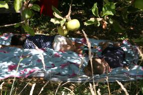 Rusten onder de appelboom