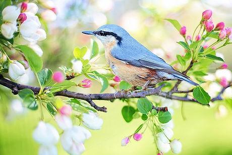 spring-bird-2295431__480.jpg