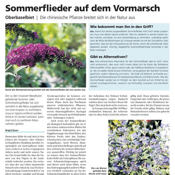 Sommerflieder%20Ausschnitt_edited.jpg
