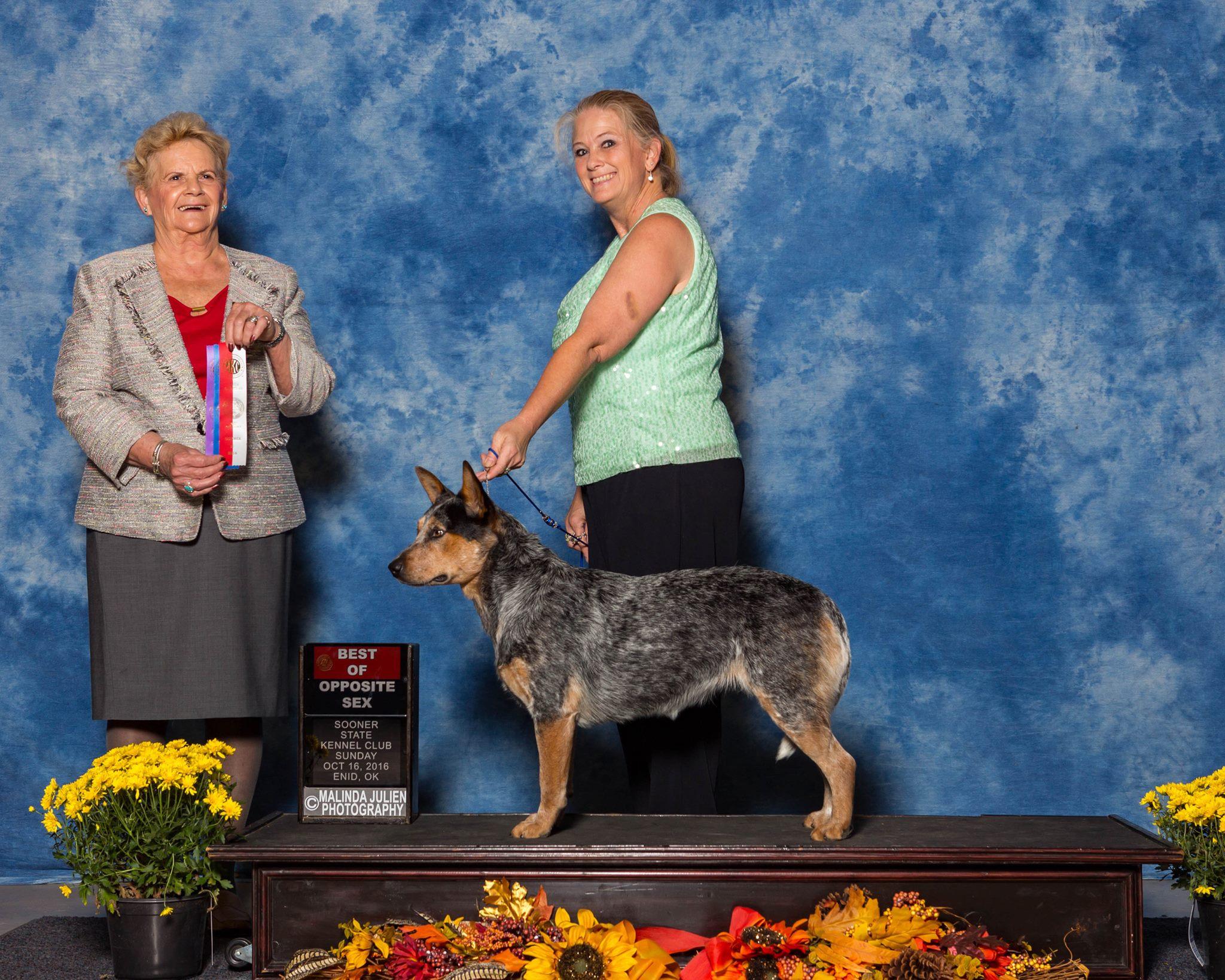 Enid Dog Show Sooner State Kennel Club