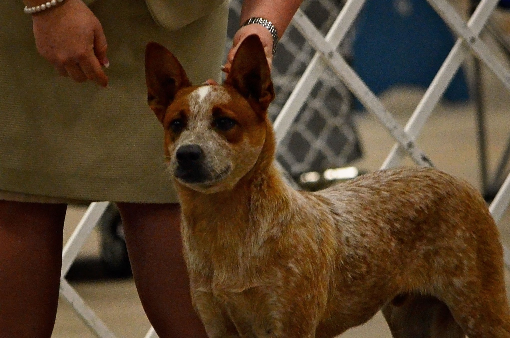 Enid Dog Show Sooner State Kennel Club