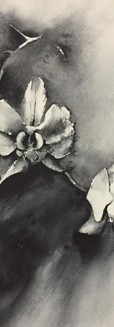 Lilian Arbex_Orchid I_30,5x45,5cm_Brazil