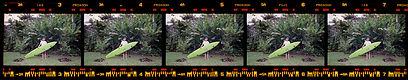 John John and his board in North Shore Hawaii