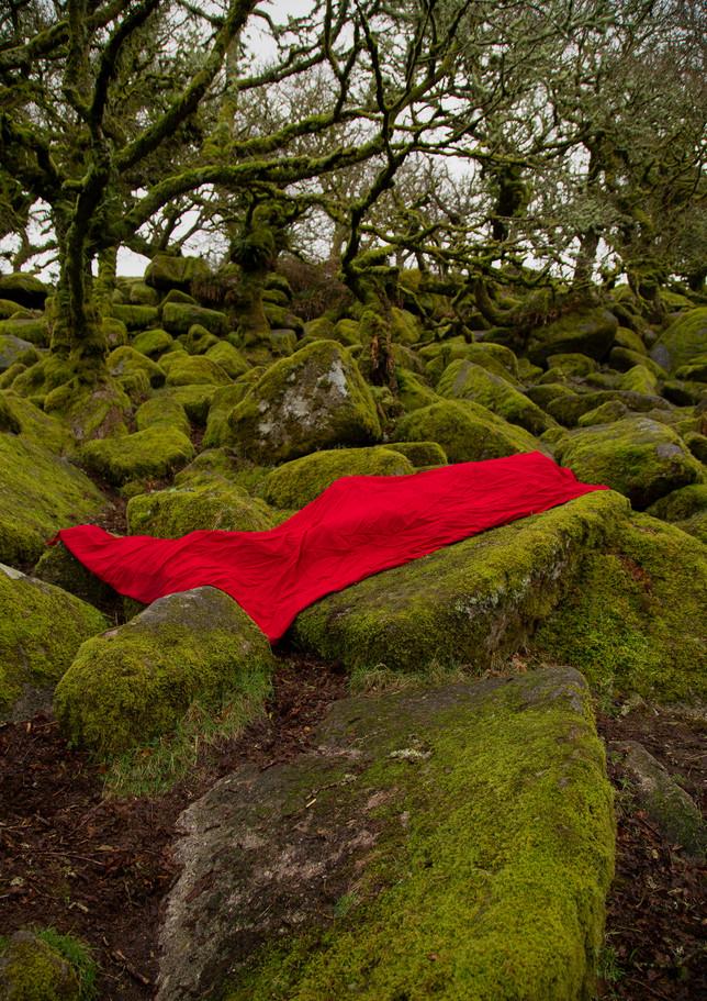 red woods .jpg