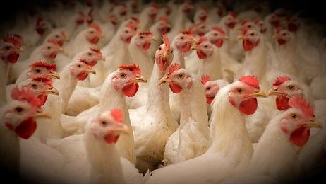 industry-livestock_edited.jpg