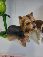 Best of Breed Yorkshire Terrier
