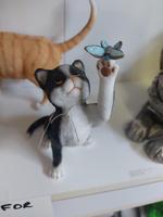 Home Cat Black & White Bfly