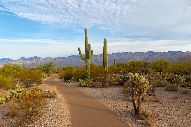Arizona Desert by Christoph von Gellhorn