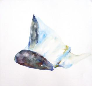 Whalebones #37