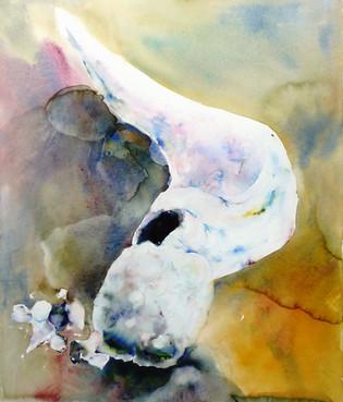 Whale Bones #30