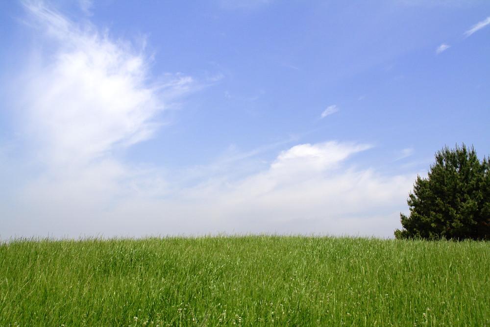 青空と緑の芝生