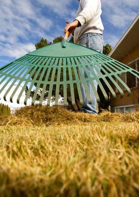 Raking Grass