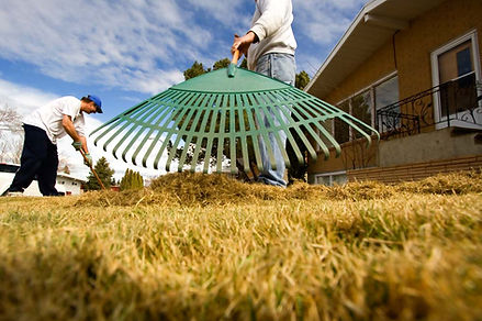 Raking your grass in the spring