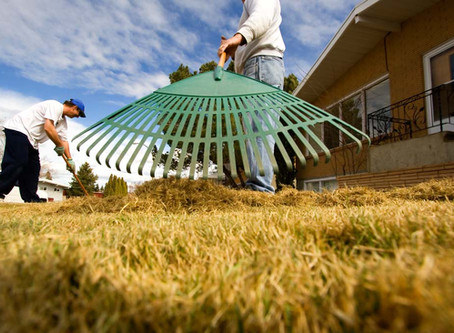 Is Your Lawn Ready for Summer?