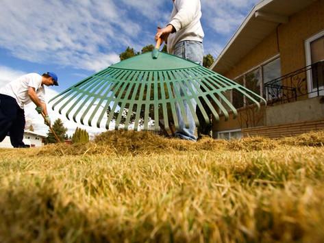 Spring Yard Maintenance