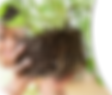 DQ-header-image-5.2.3.png