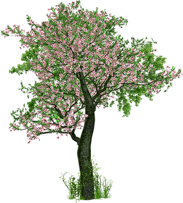 tree-1511608_1920.png