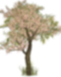 tree-1511608_1920_edited.png