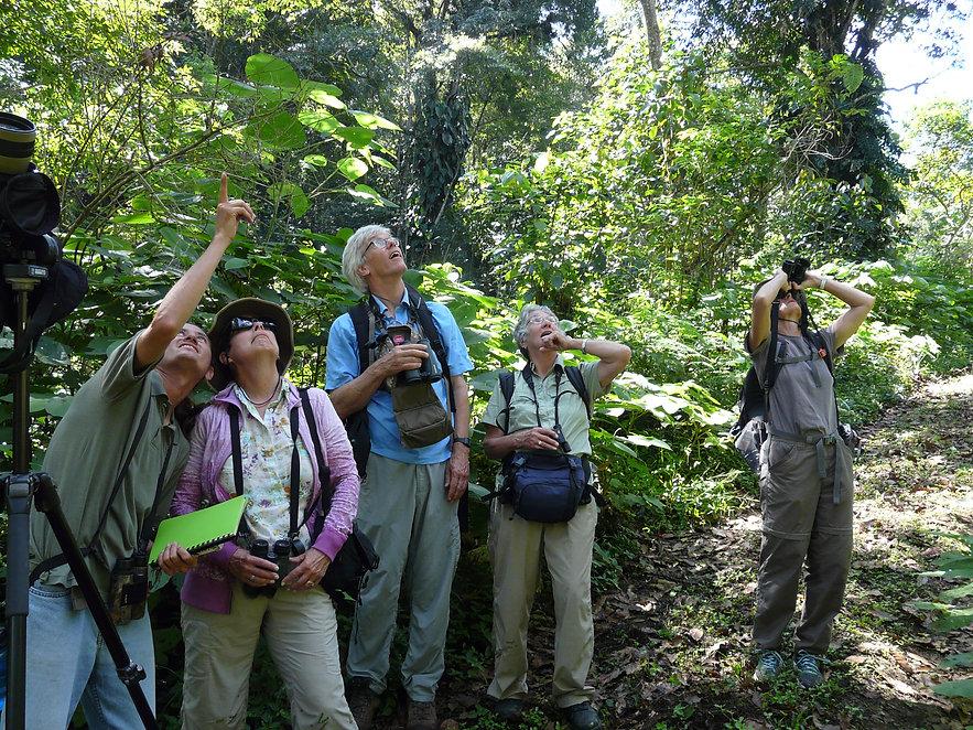 Veracruz-birding-Coffee-plantation.jpeg.