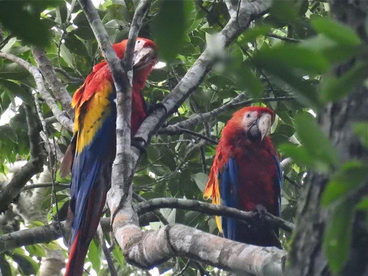 Veracruz-Tour-Scarlet-Macaws.jpg