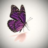Trabalho energético, Depoimento Magia da Transformação, Transformação Pessoal, Testemunho, Melhoria de vida