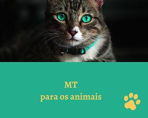 Trabalho energético para animais, ajuda para animais, cura de doença para animais, cura natural para animais, Magia da Transformação para animais