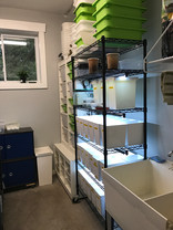 Amphibian breeding room