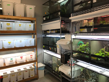 Chameleon breeding room