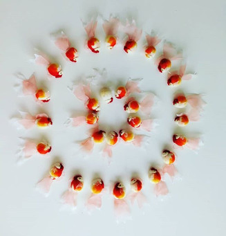 Goldfish brooch_#goldfish #needlefeltbro