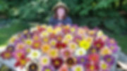 daylily table 2017 2.jpg