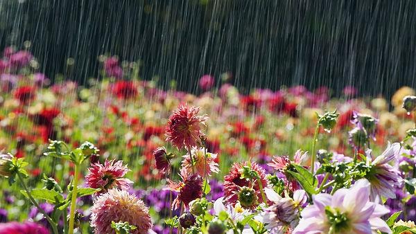 flowersshowers.jpg
