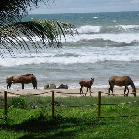Horses,Troncones Beach