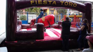 Toro adultos    2.jpeg