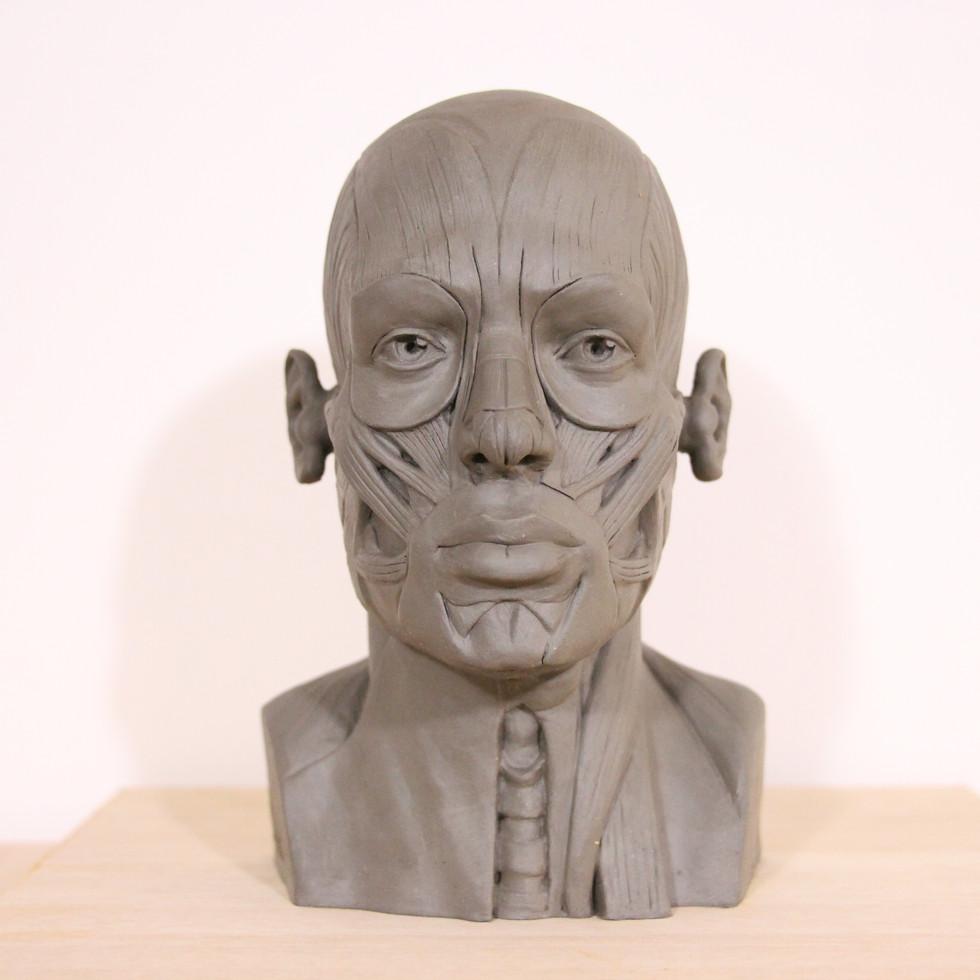 escultura . FERNANDO POLETTI . estudo da anatomia humana