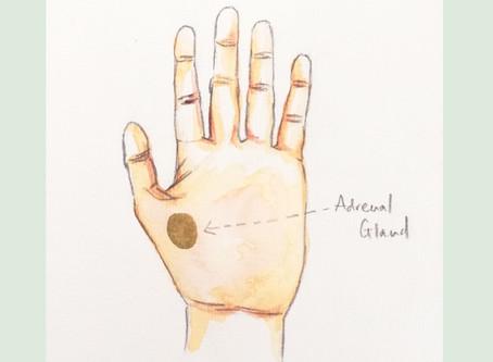 HAND REFLEXOLOGY GUIDE ~ Adrenal Glands