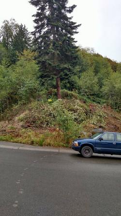 trees shot 1