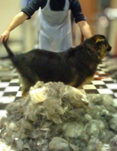 De-Shed-Dog-Grooming-Doncaster.jpg