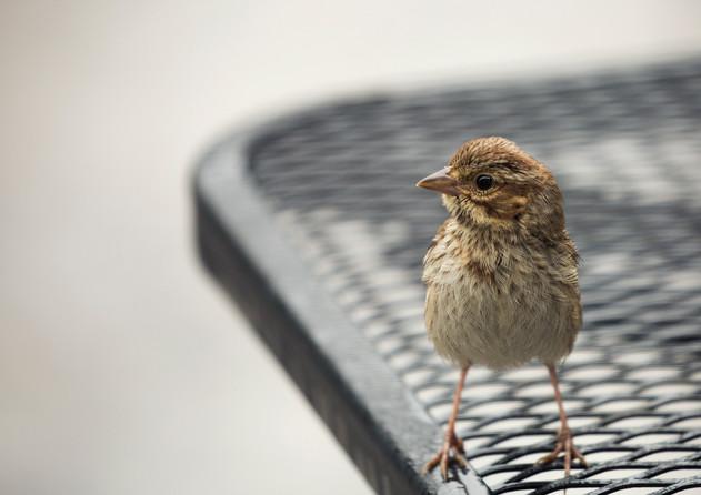 A bird in the rain