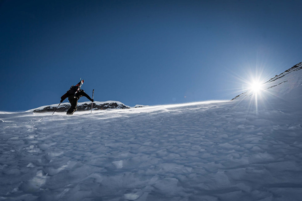 Movement Skis - Freetouring Skis - Alp T