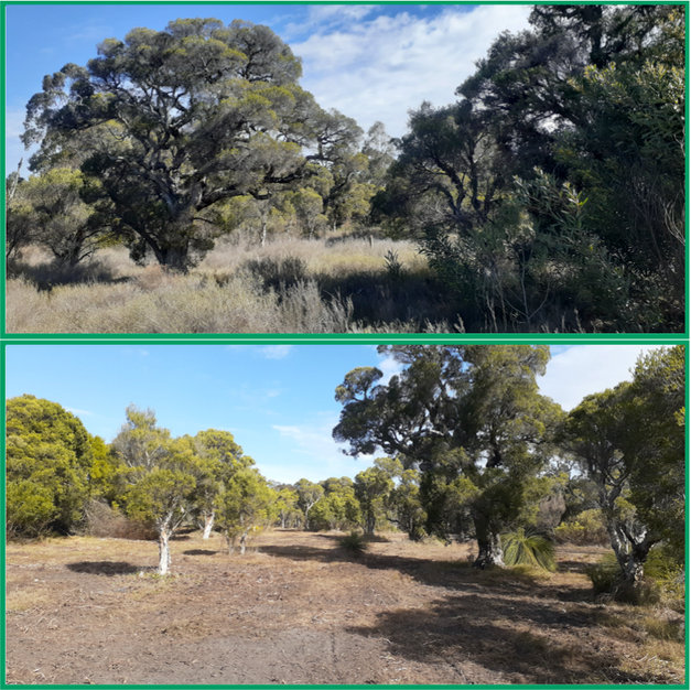 Vegetation and fuel reduction