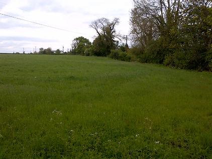 field_01529.jpg