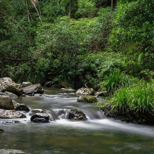 Bandarri National Park - Running Water