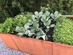 Gemüse-&-Kräutergarten-ZeiT-Genusswerkst
